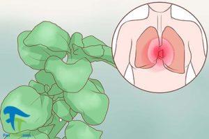 1 استفاده از دمنوش گیاهی برای کاهش التهاب