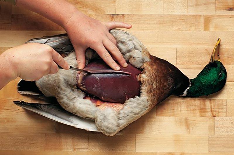 10 نحوه صحیح جدا کردن پوست و پر اردک