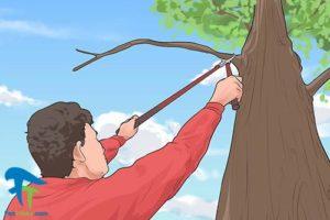 2 دور کردن کلاغ ها از خانه و باغ