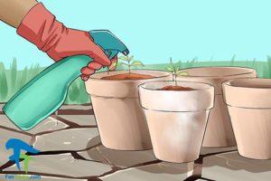 2 استفاده از هیدروژن پراکسید برای گل و گیاه