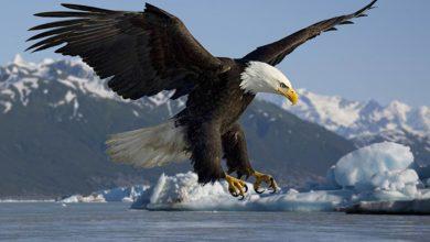 Photo of چگونه پر و بال، دم و ناخن یک پرنده را برای طولانی مدت نگهداری کنیم؟