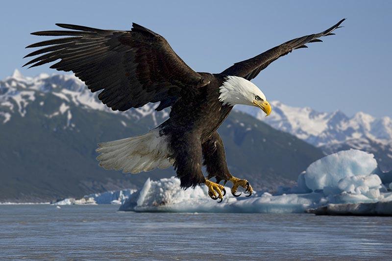2 روش نگهداری طولانی اجزای بدن پرندگان