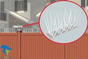 3 دور کردن کلاغ ها از خانه و باغ