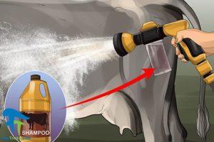 4 اصول صحیح شستن و تمیز کردن گاو