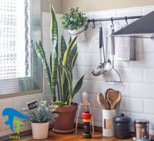 4 گیاهان مناسب برای پرورش در آشپزخانه