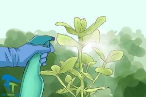 4 استفاده از هیدروژن پراکسید برای گل و گیاه