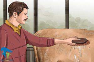 5 اصول صحیح شستن و تمیز کردن گاو