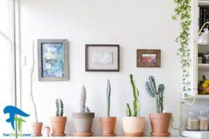 5 گیاهان مناسب برای پرورش در آشپزخانه