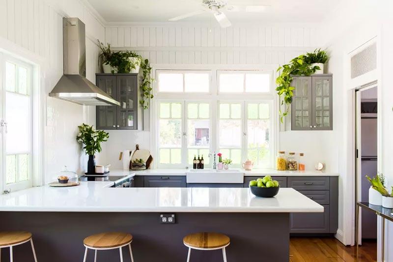 6 گیاهان مناسب برای پرورش در آشپزخانه