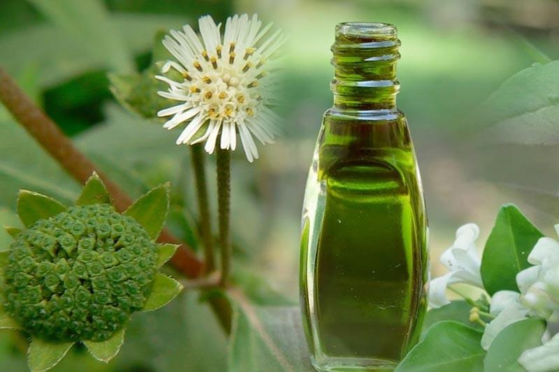8 استفاده از روغن بهیرنگراج برای رشد مو