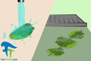 1 چگونگی استفاده از گیاه سنفیتون