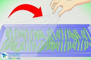 4 طرز خشک کردن انواع لوبیا و باقالی