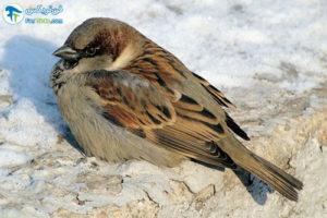 1 گرم ماندن پرندگان در فصل زمستان