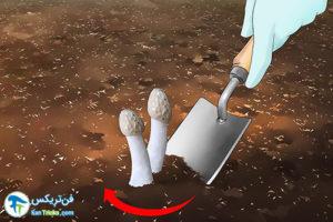 1 از بین بردن قارچ سمی از باغچه