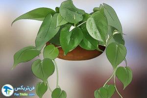 10 گیاهانی که به مراقبت کمی احتیاج دارند