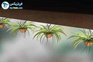 14 گیاهانی که به مراقبت کمی احتیاج دارند