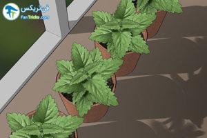 15 گیاهانی که به مراقبت کمی احتیاج دارند