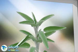 16 گیاهانی که به مراقبت کمی احتیاج دارند