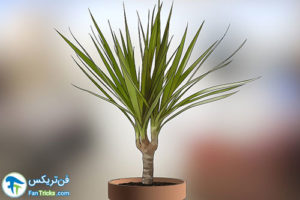 17 گیاهانی که به مراقبت کمی احتیاج دارند