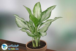 18 گیاهانی که به مراقبت کمی احتیاج دارند