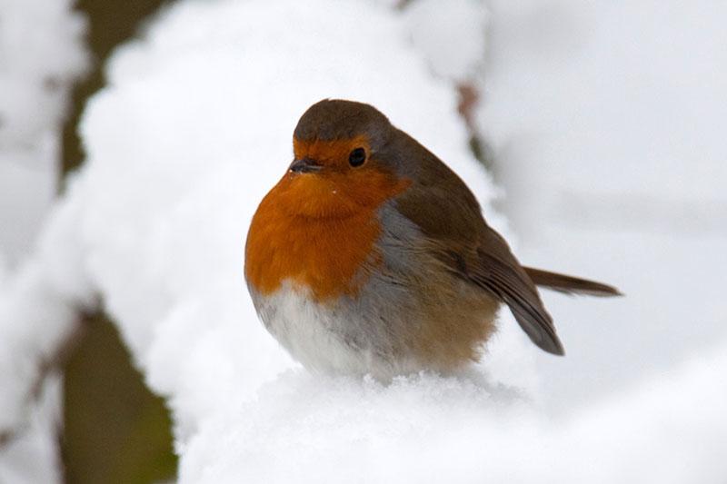 2 گرم ماندن پرندگان در فصل زمستان