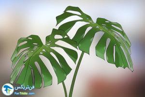 20 گیاهانی که به مراقبت کمی احتیاج دارند