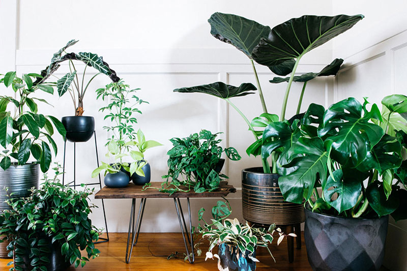 21 گیاهانی که به مراقبت کمی احتیاج دارند