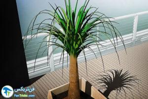 3 گیاهانی که به مراقبت کمی احتیاج دارند
