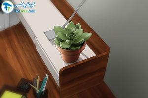 5 گیاهانی که به مراقبت کمی احتیاج دارند