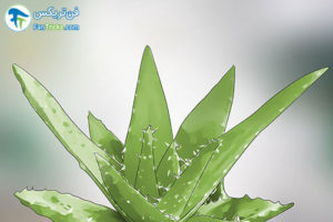 6 گیاهانی که به مراقبت کمی احتیاج دارند