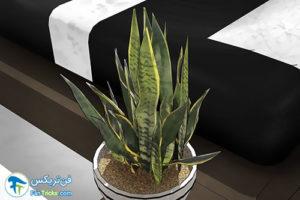 7 گیاهانی که به مراقبت کمی احتیاج دارند