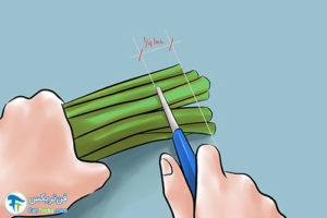3 نگهداری طولانی مدت شاخه گل لاله