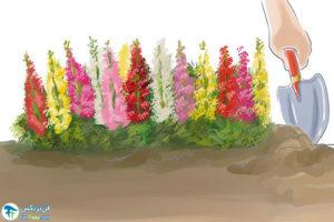 3 افزایش گل دهی گیاه با روش ارگانیک