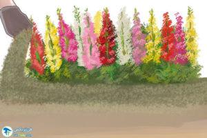 4 افزایش رشد و گلدهی گیاهها با روش ارگانیک