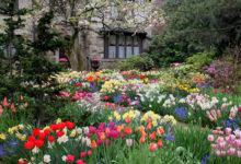 Photo of چگونگی افزایش گل دهی گیاهان به روش ارگانیک و طبیعی