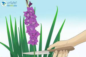 1 تازه نگه داشتن طولانی مدت گل گلایول