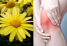 Photo of درمان طبیعی و گیاهی آرتریت یا التهاب مفاصل با گل همیشه بهار کوهی