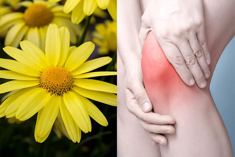 3 تاثیرگل همیشه بهار بر درمان آرتریت