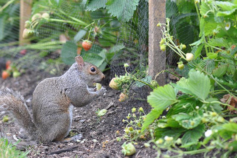 3 مراقبت از گیاهان در برابر حیوانات