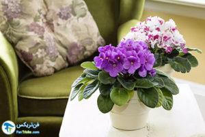 6 گل های بسیار کوچک خانگی
