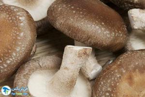1 اصول مصرف و نگهداری قارچ شیتاکه