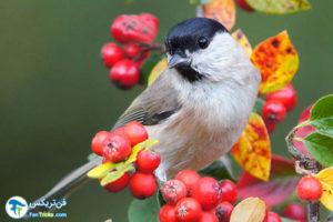 1 انواع رنگ جهت جذب و دور کردن پرندگان
