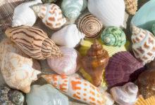 Photo of روش های شستن، تمیز کردن و از بین بردن بوی بد صدف و گوش ماهی