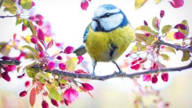 Photo of چه رنگ هایی پرندگان را جذب و یا دور می کند؟