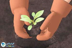4 اصول صحیح کاشت و پرورش گل زنبور