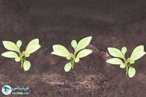 5 اصول صحیح کاشت و پرورش Gaura