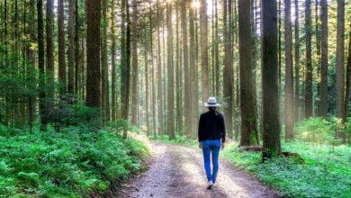 Photo of چرا و چگونه حمام جنگل باعث کاهش استرس، افسردگی و بیماری می شود؟