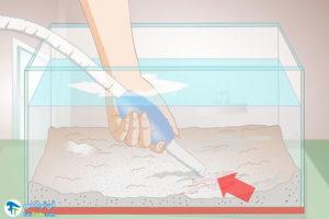 2 از بین بردن سیانوباکتری از آکواریوم