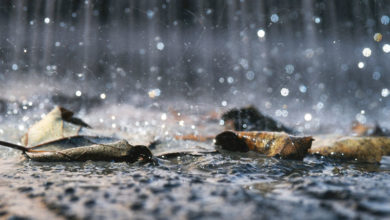 Photo of چگونه یک باران اسیدی شبیه سازی کنیم؟