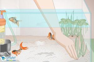 5 سیانو باکتری آب آکواریوم